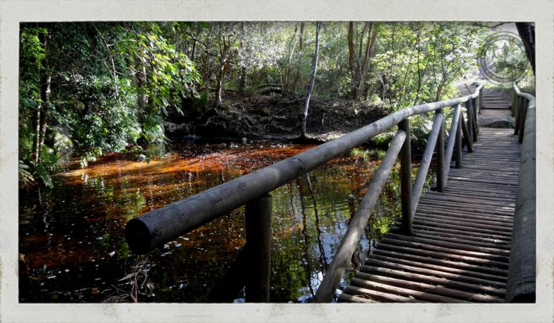 Trail running Cape Town