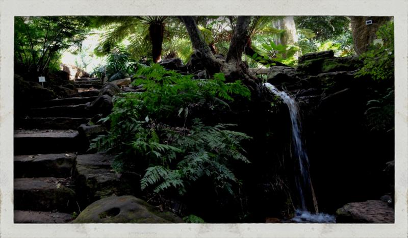 Trail running guided tour Cape Town