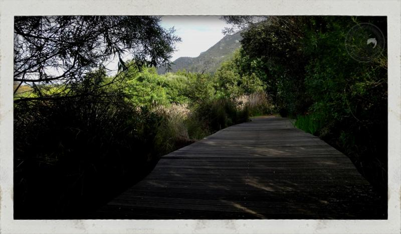 Guided running tours Cape Town