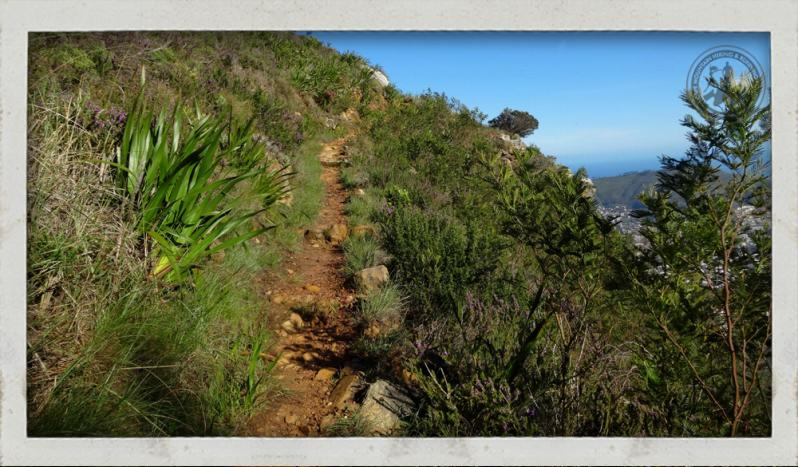 Trail running Table Mountain