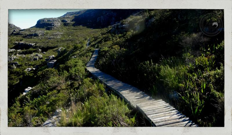 Table Mountain, trail run, South Africa